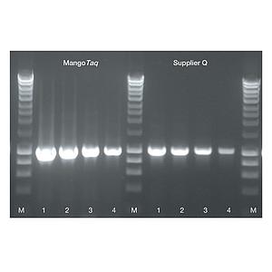 mangotaq DNA